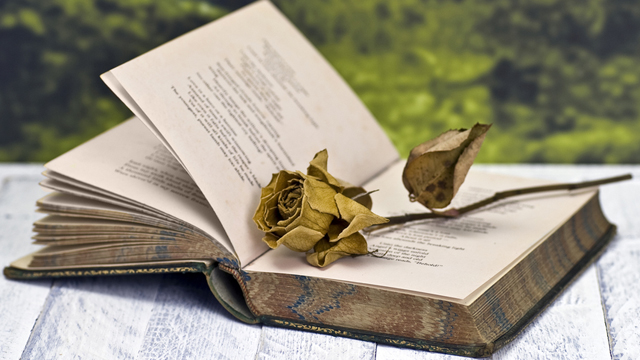 novel and dry flowers